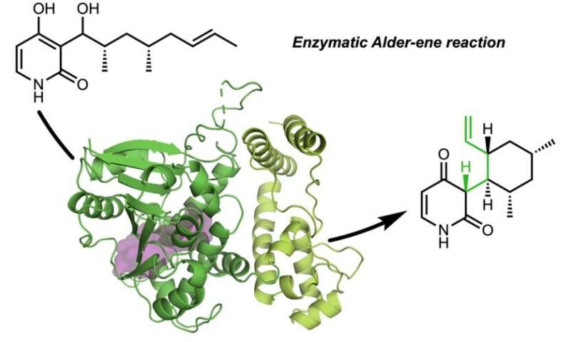 Researchers discover first enzymes to catalyze a classic organic reaction
