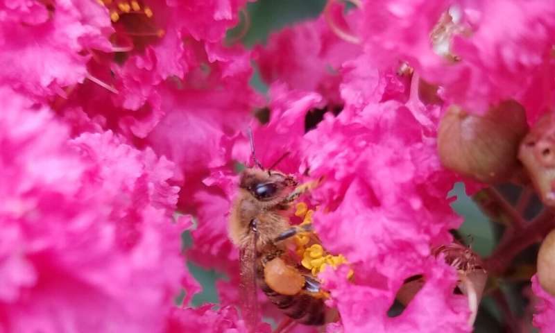 Study reveals important flowering plants for city-dwelling honey bees