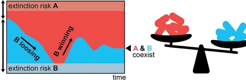 Researchers discover new mechanism for the coexistence of species