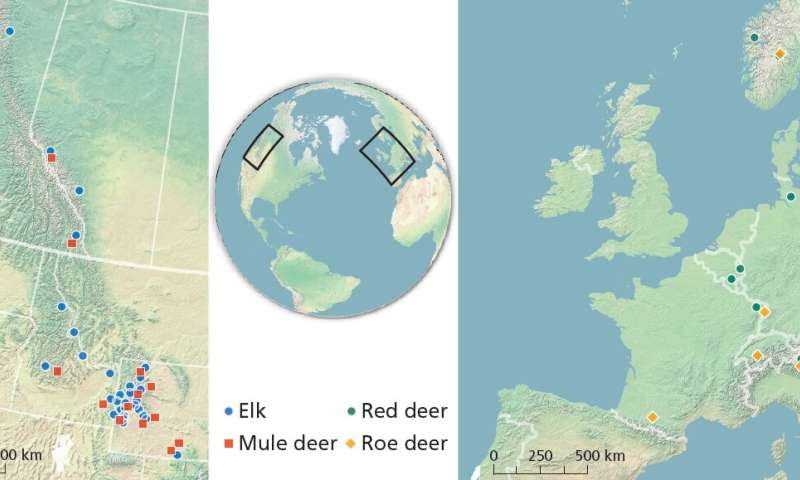 International study gets at the root of what makes deer migrate