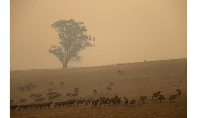 2 Aussie wildfires merge into inferno; man seriously burned
