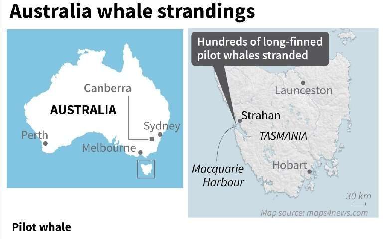 At least 380 whales dead in Australia mass stranding