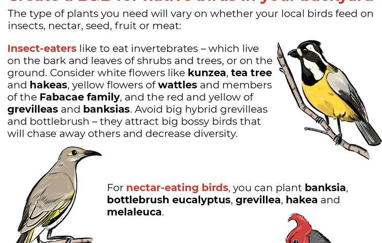 B&Bs for birds and bees: transform your garden or balcony into a wildlife haven