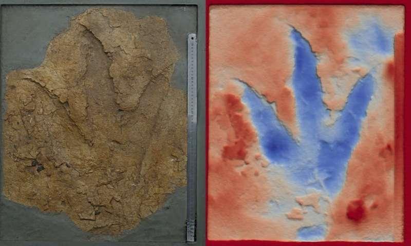 Dinosaur footprints show predators as big as _T. rex_ stomped across Australia 160 million years ago