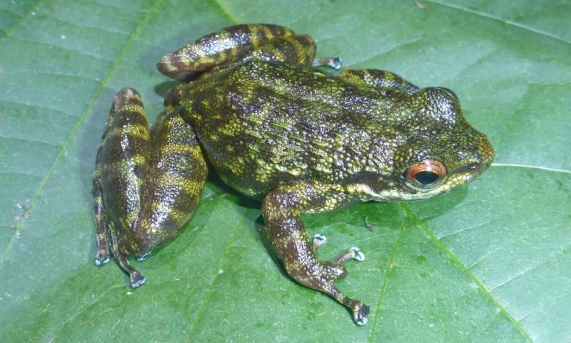 Fanged frogs, dwarf crocodiles and folding tortoises? Welcome to West Africa