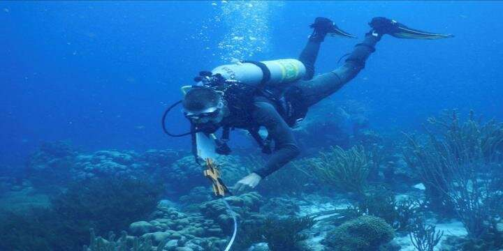 FSU researchers find diverse communities comprise bacterial mats threatening coral reefs