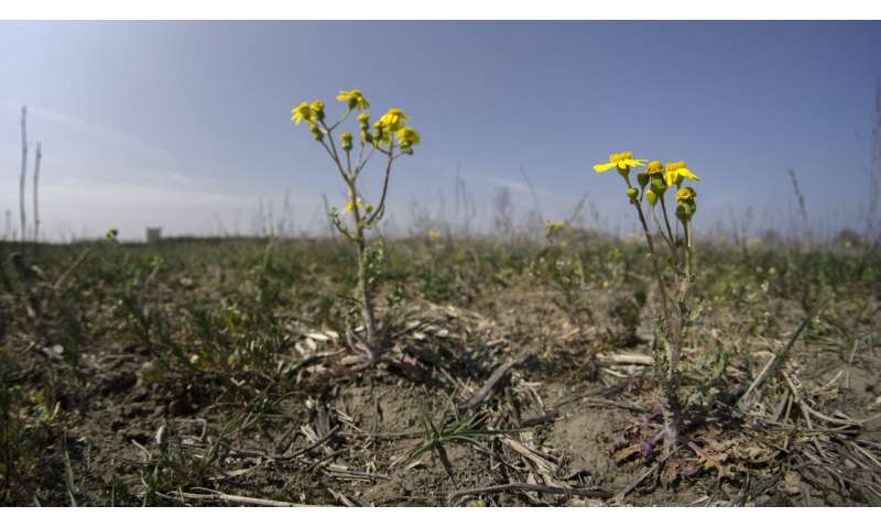 Germany hopes for rain to avoid 3rd straight summer drought