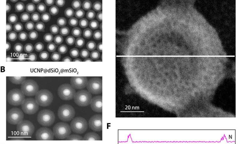 Highly sensitive nanosensor detects subtle potassium changes in the brain