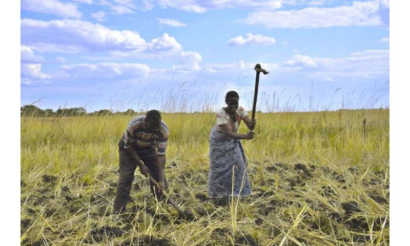Identificación de soluciones locales en la llanura aluvial de barotse para el desarrollo agrícola sostenible