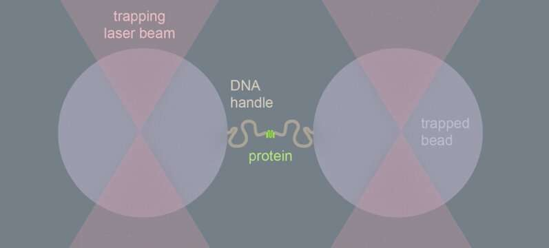 Molecular machine tears toxic protein clumps apart