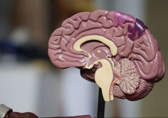 Neuroscience study finds 'hidden' thoughts in visual part of brain