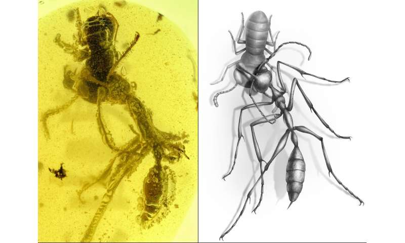 New fossil discovery shows how ancient 'hell ants' hunted with headgear