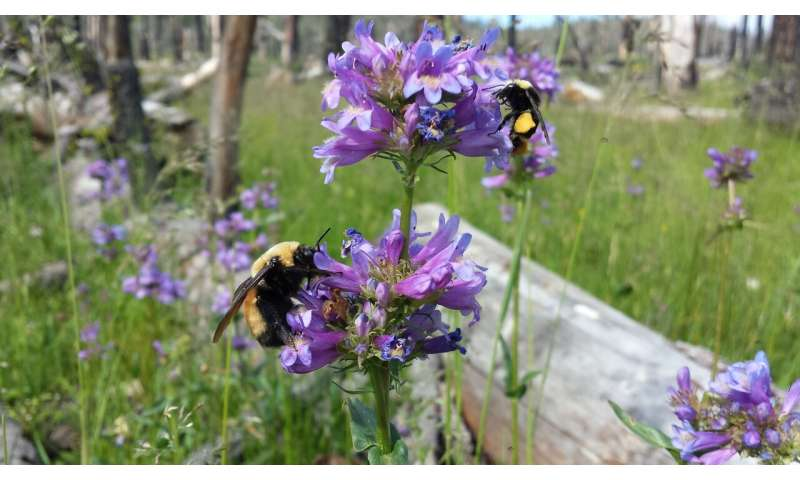 New study identifies bumble bees' favorite flowers to aid bee conservation