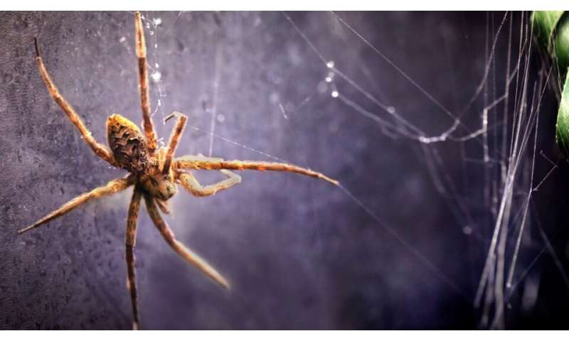 New study reveals a life aquatic for many spider species