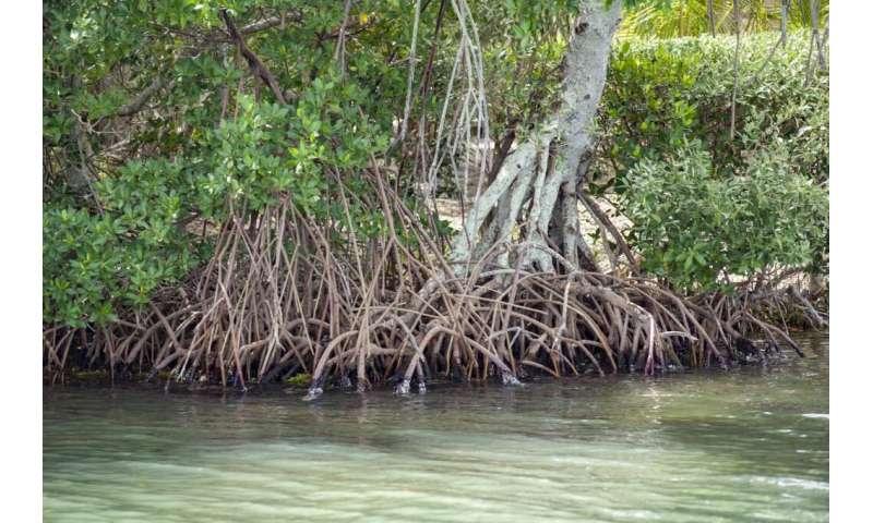 innovation Plant study challenges tropics' reputation as site of modern evolutionary innovation