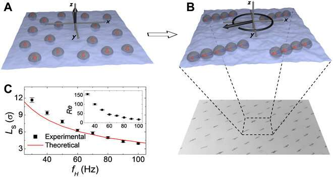 Reconfigurable structure and tunable transport in synchronized active spinner materials