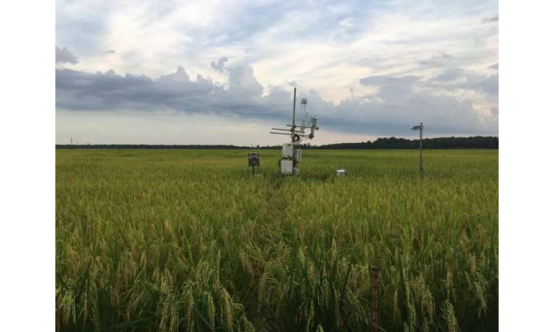 Smart farms of the future: Making bioenergy crops more environmentally friendly