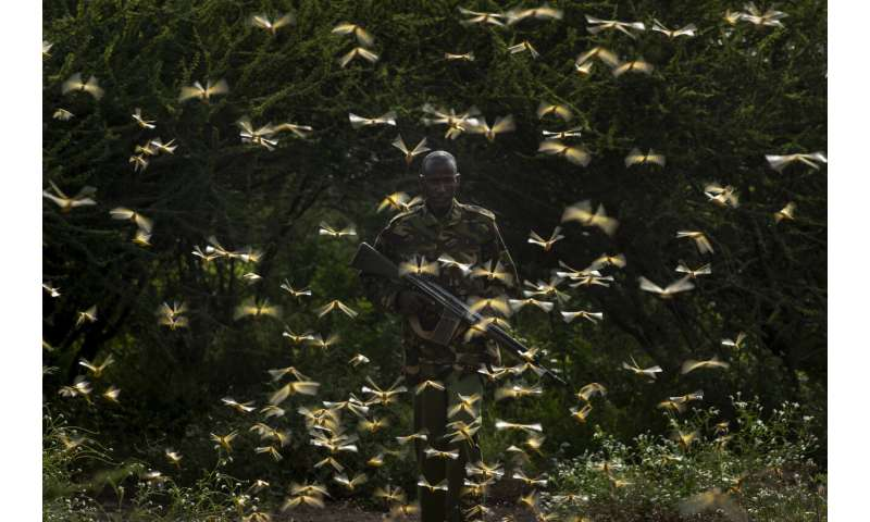 Supercomputer helps in tracking East Africa locust outbreak