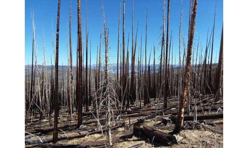 The effects of wildfires and spruce beetle outbreaks on forest temperatures