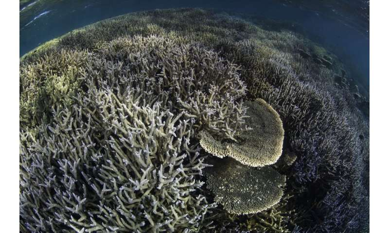 The first step to conserving the Great Barrier Reef is understanding what lives there