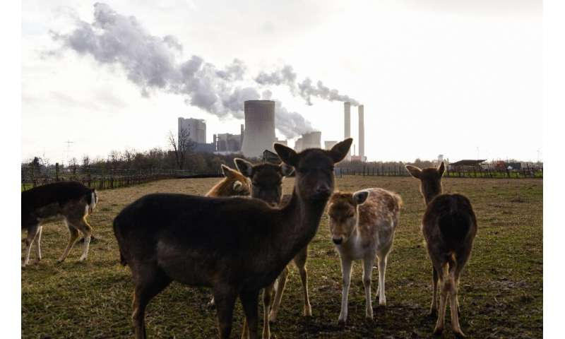 The study found that emissions from the power sector fell 22 percent during the first six months of 2020