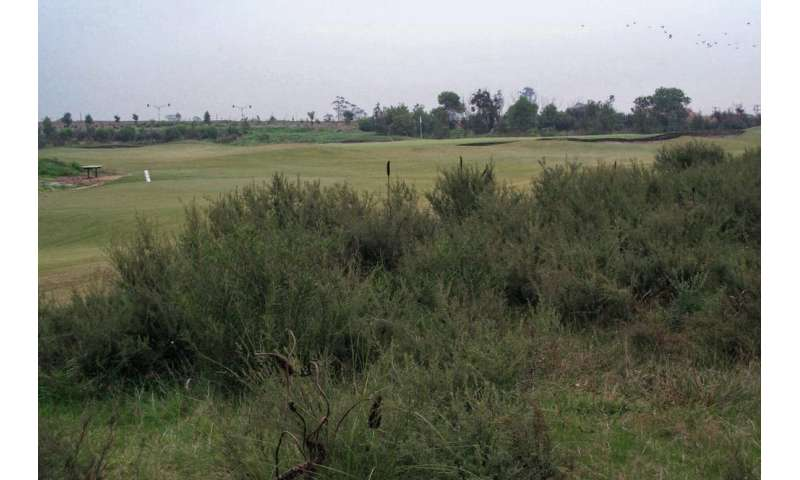 Urban golf courses are biodiversity oases—opening them up puts that at risk