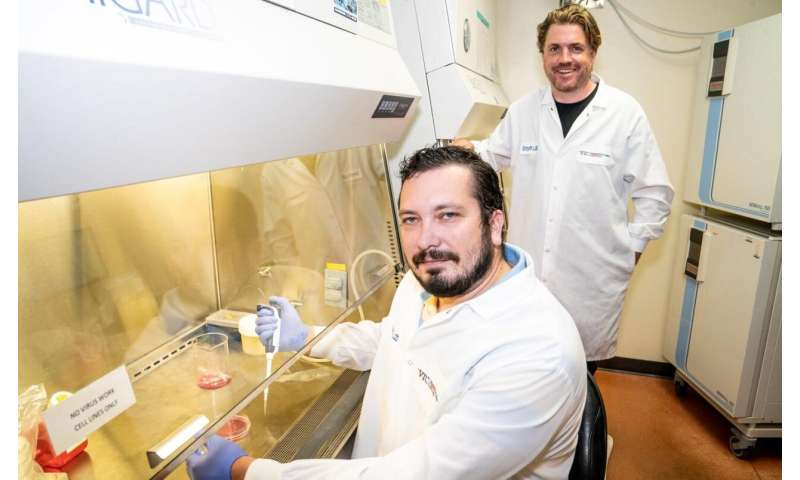 Virginia Tech scientists confirm usually harmless virus attacks the heart's electrical system