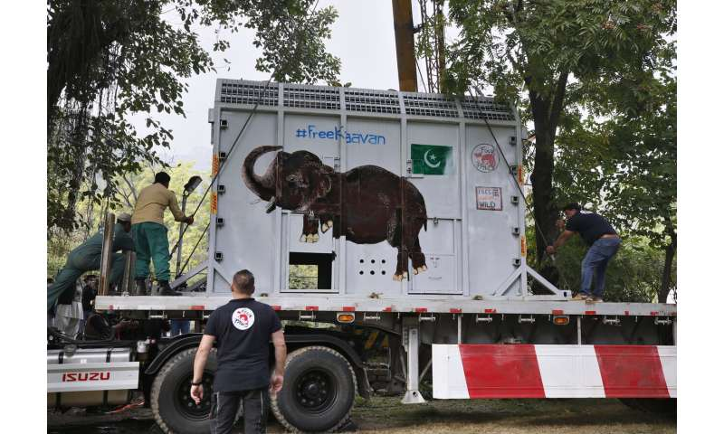 'World's loneliest elephant' arrives safely in Cambodia