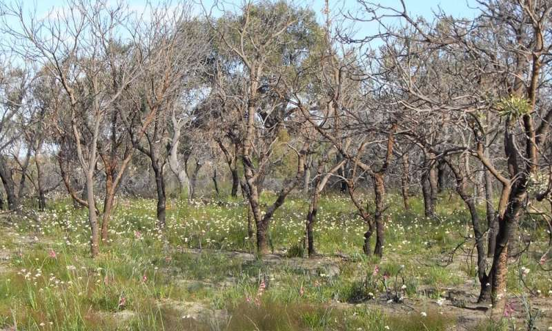 Yes, native plants can flourish after bushfire. But there's only so much hardship they can take