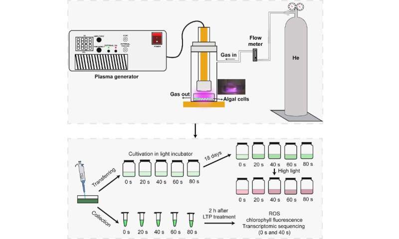 Scientists develop novel technology to stimulate biomass and astaxanthin accumulation in haematococcus