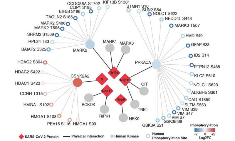 Coronavirus and cancer hijack the same parts in human cells to spread—existing cancer drugs could fight COVID-19