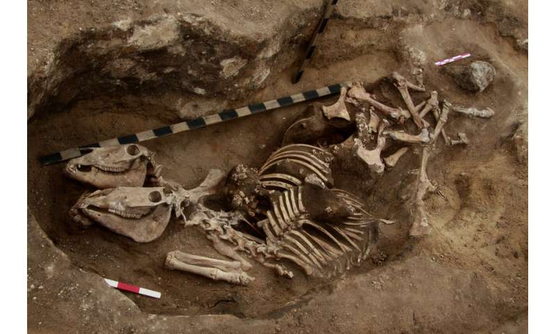Russian scientists have discovered the most ancient evidence of horsemanship in the bronze age