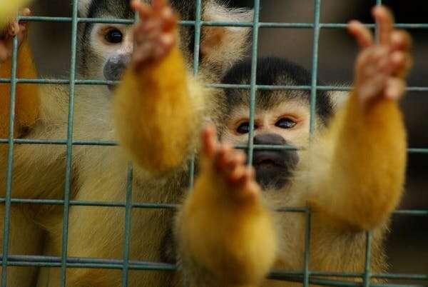 El coronavirus muestra que debemos tomarnos en serio el bienestar de los animales