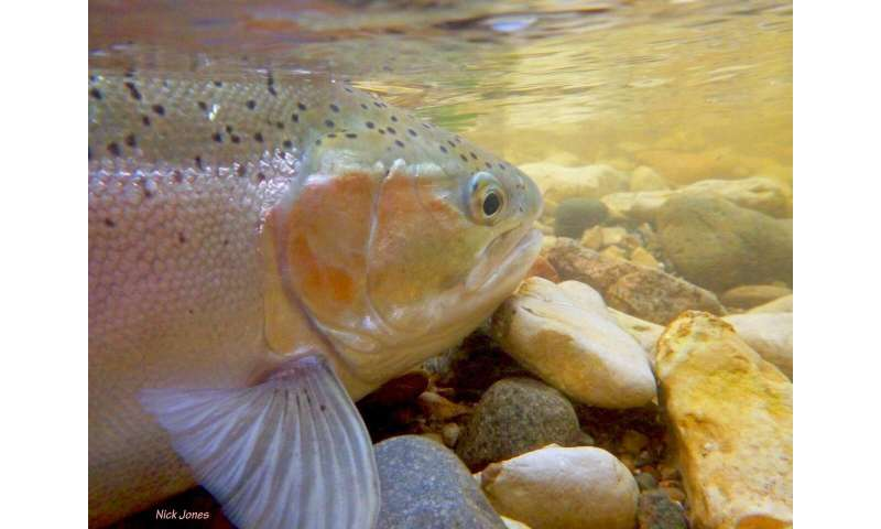 Climate change's toll on freshwater fish: A new database for science