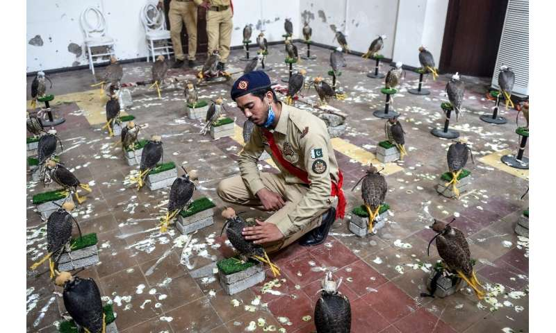 Pakistan foils attempt to smuggle endangered falcons
