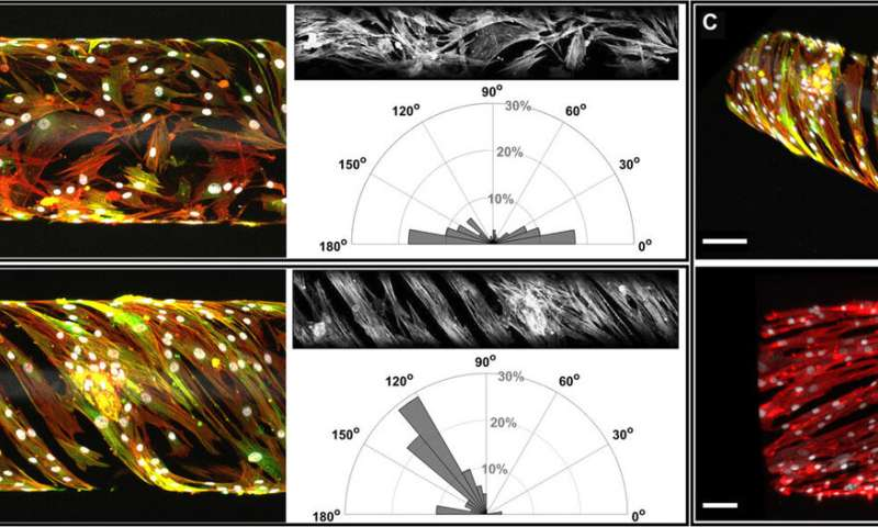 Bioengineering biomimetic human small muscular pulmonary arteries