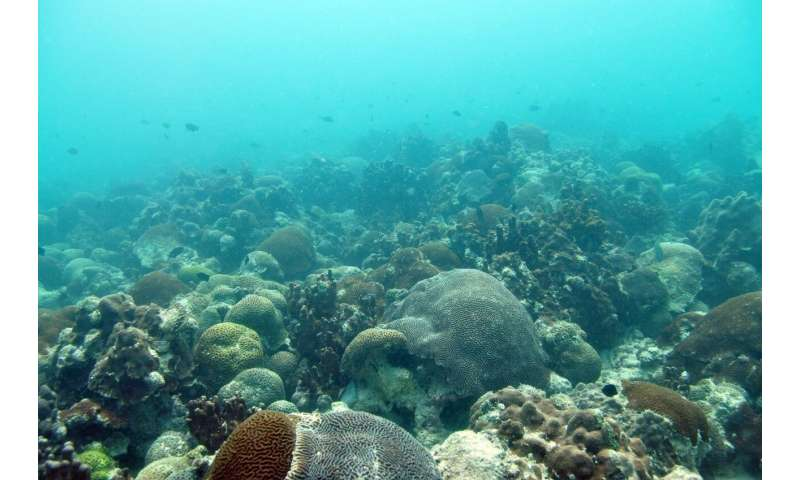 NYUAD researchers find new method to allow corals to rapidly respond to climate change