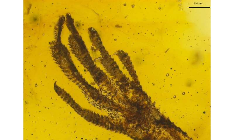 Rare lizard fossil preserved in amber