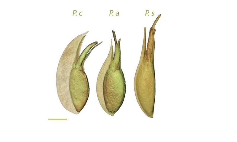 Research reveals unique reproductive trait for seagrass