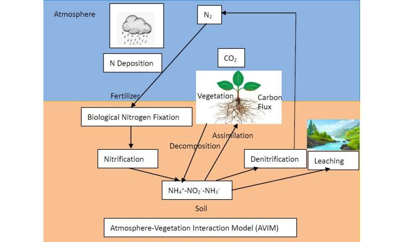 Scientists improve a land surface model to better simulate the carbon-nitrogen flux