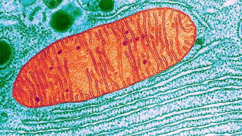 Scientists look to cell recycling tools for new ways to treat Parkinson's disease