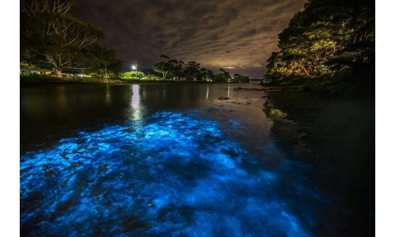 Sparkling dolphins swim off our coast, but humans are threatening these natural light shows
