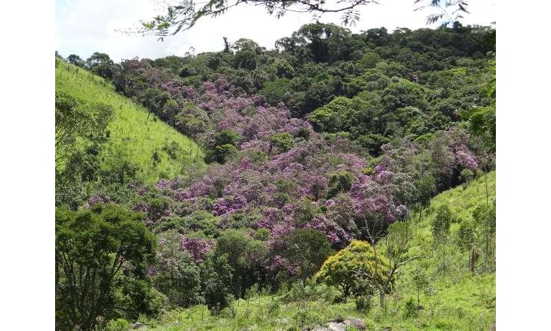 Study investigates Atlantic Rainforest regeneration in the state of São Paulo