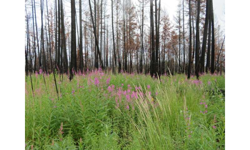 UBCO researchers concerned about prey and predator species in post-fire logging areas