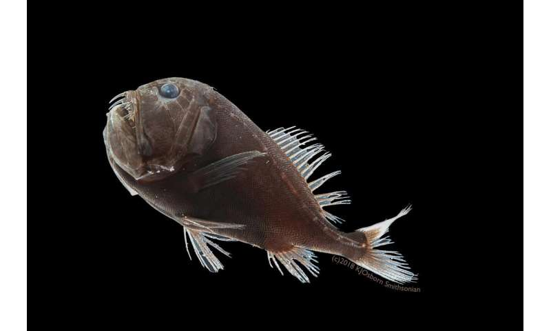 Scientists discover how deep-sea, ultra-black fish disappear