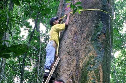 Researchers assemble first comprehensive list of Panama's trees with geographic ranges