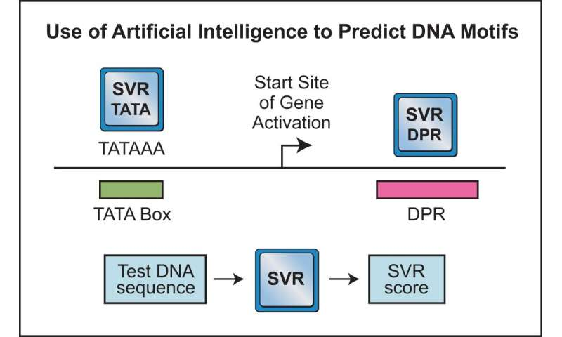 Artificial intelligence aids gene activation discovery