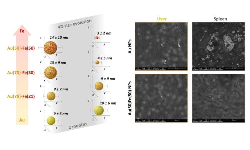 4D nanoparticles open new perspectives in safer treatment of tumors with nanomedicine