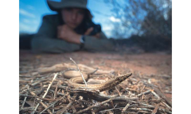 Australia is full of lizards, so I went bush to find out why