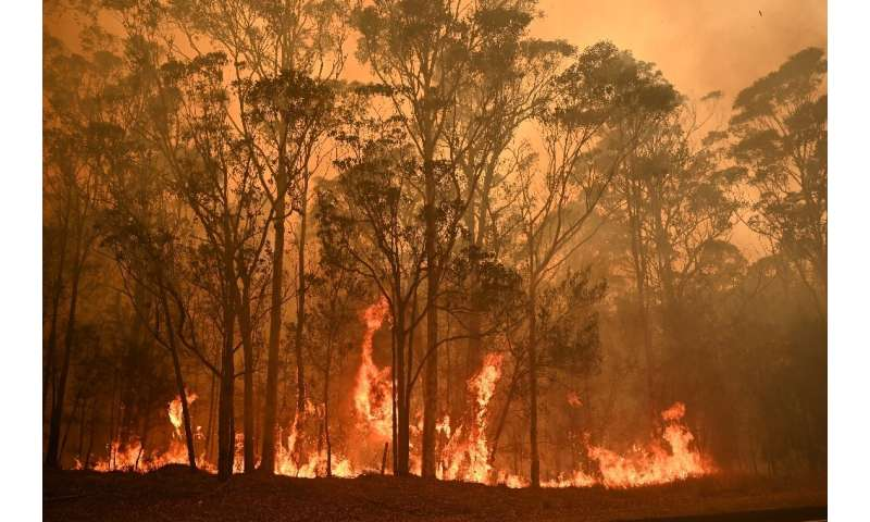 Australia's bushfires have swept through an area larger than Portugal